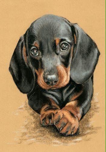 Pin By Edilaine Carneiro On Arte Em Giz Pastel Dog Paintings