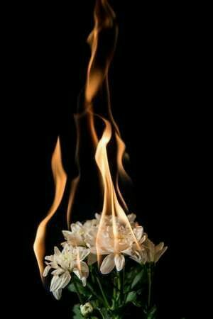 Pin By Nourseen Adel On Background Burning Flowers Black Background Wallpaper Rose On Fire