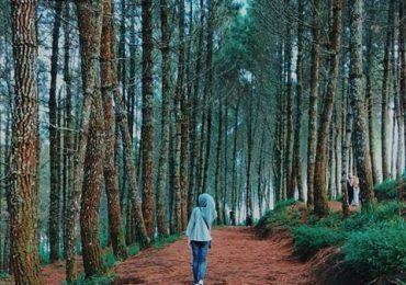 Kamojang Ecopark Garut Garut Trip Agent Pemandangan Rumah Pohon Pohon
