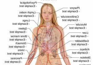 Image Result For Female Reproductive System Pictures Real Pdf