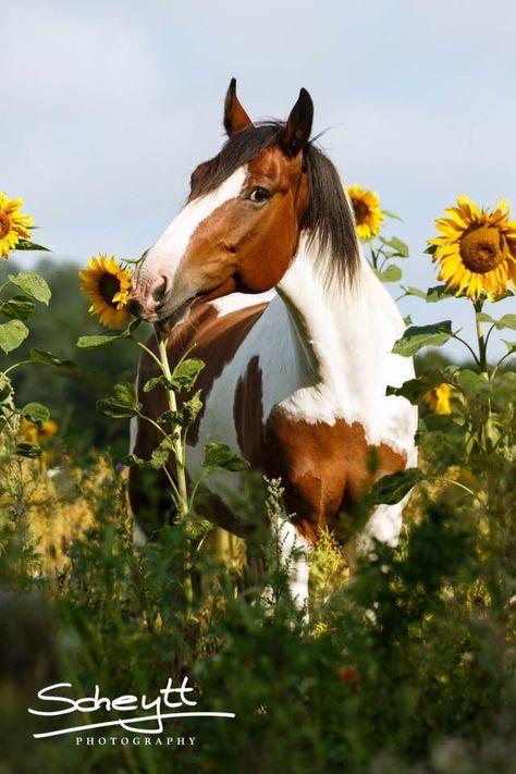 DiePferdefotografin.de ǀ Friederike Scheytt Horse Addicted