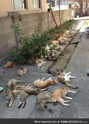 What Happens When You Grow Catnip In Your Backyard Growingcatnip With Images Catnip Funny Cat Memes Cat Memes