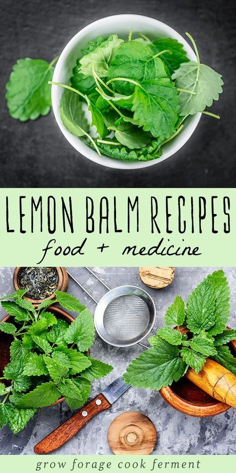 Lemon Balm Recipes: food, drinks, remedies, + more! Got lemon balm? Here are over 30 delicious lemon balm recipes to help you use all of this edible and medicinal herb growing in your yard! Lemon Balm Recipes, Lemon Balm Uses, Herb Recipes, Drink Recipes, Salve Recipes, Healing Herbs, Medicinal Herbs, Home Remedies, Natural Remedies
