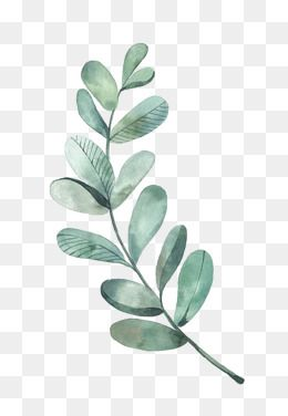 Watercolor Leaves Png Images In 2020 Watercolor Leaves Leaf
