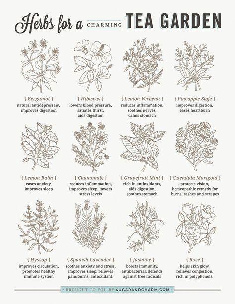 How to Create a Tea Garden - Sugar and Charm