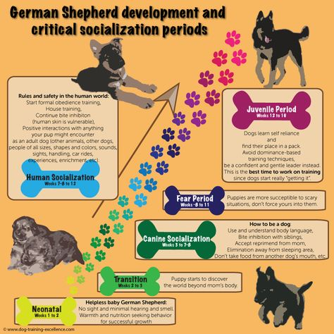 German Shepherd Puppies Training Zoe Fans Blog German Shepherd