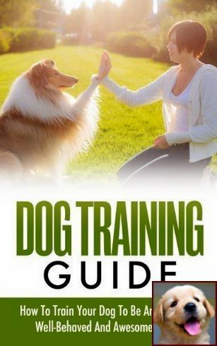 House Training Unvaccinated Puppy And Clicker Dog Training Uk