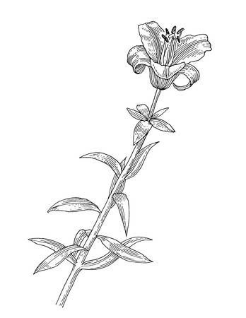 Stock Photo Art Graphique Fleur De Lys Dessin Dessin