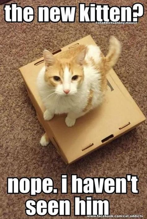 24 Cat Memes That Are Seriously Funny Cute Animal Memes Funny Animal Pictures Funny Cat Pictures