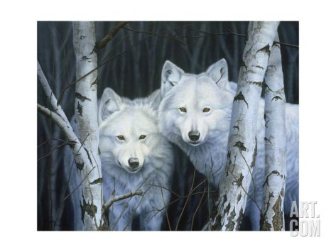 White Wolf: Rusty Frentner: talented wildlife artist from America's Midwest