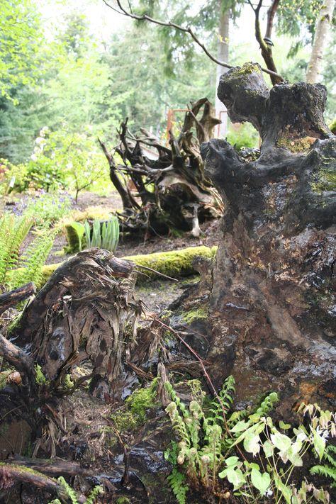 Featured Garden ‹ DIG Nursery  stumpery