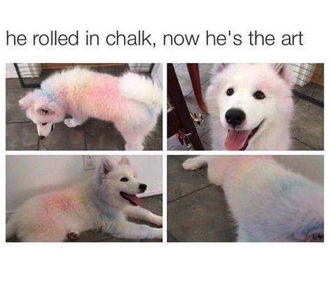 Ruff Day Cure Doggo Memes (27 Memes)