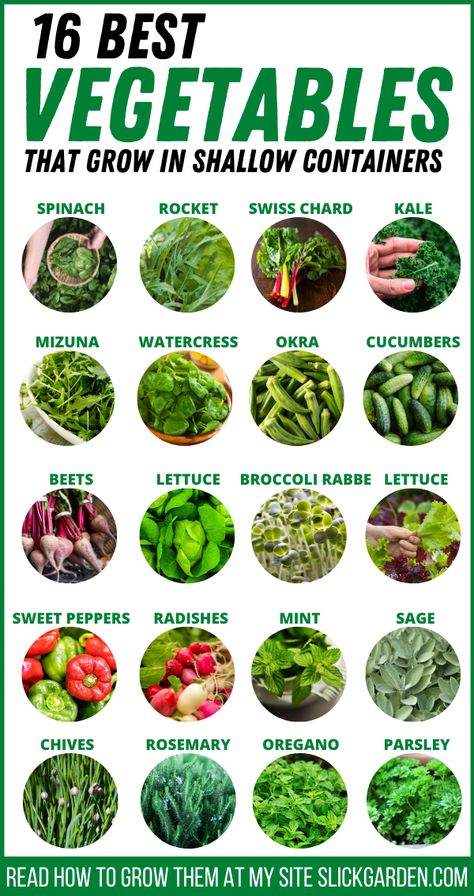 16 Best Vegetables That Grow Best In Shallow Container - Container Vegetable Gardening