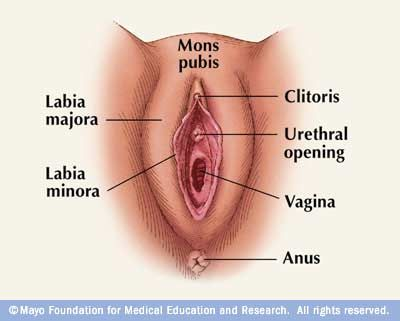 what affects vaginal health? the vagina is a closed muscular canal, Human Body