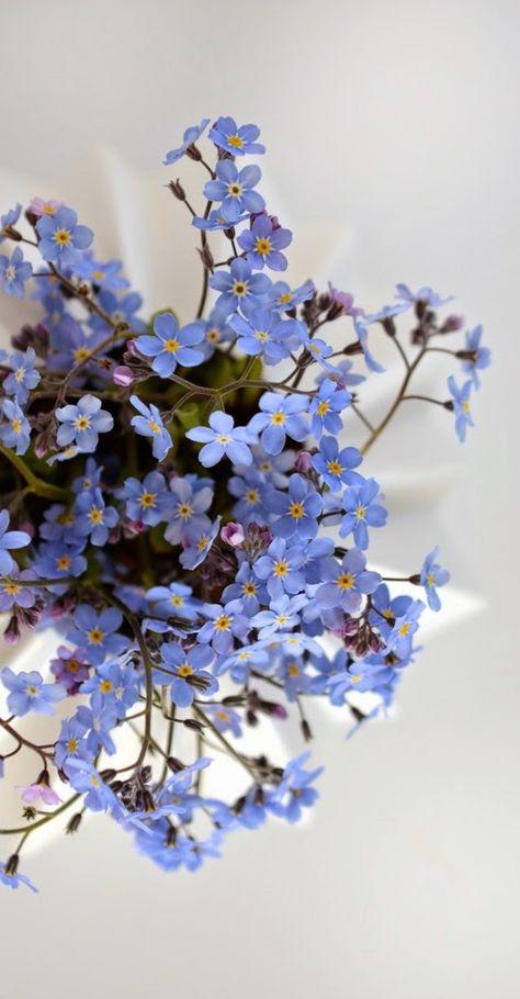 ACEO LE PRINTS Fantasy Fairy Forget Me Nots blue flower