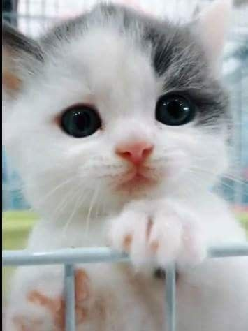 Click The Photo For More Cute Cat Videos Kittens Cutest Baby