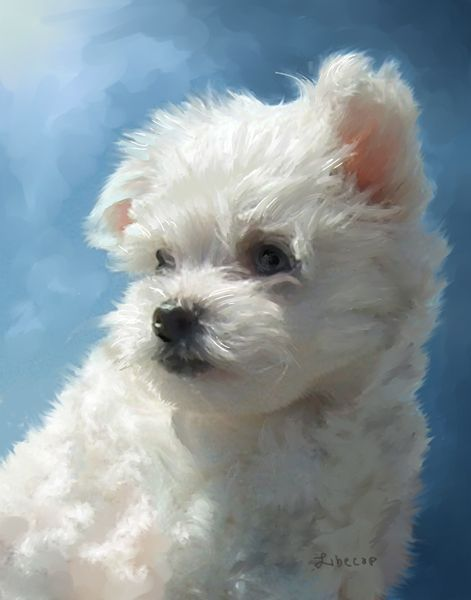 Maltese Puppy Painting Animal Drawings