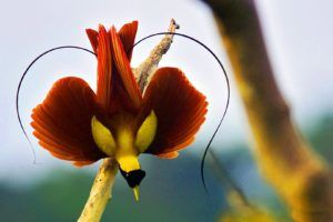Bird Of Paradise Hd Wallpaper Image 26 Hd Wallpapers Buzz Most Beautiful Birds Beautiful Birds Bird Pictures