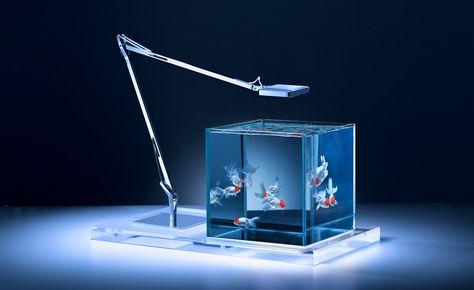 Check Out Haruka Misawau0027s Alluring Aquariums | Aquariums, Tank Design And  Wallpaper Magazine