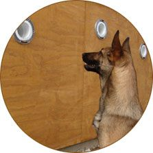 Wall Kit Dog Training