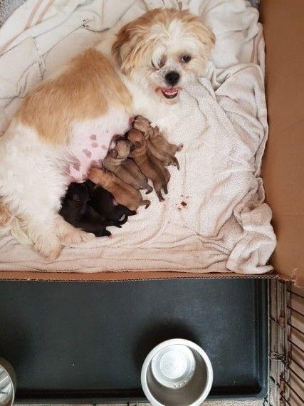 Fuzzy Pugs Pugs Pug Puppies My Beau