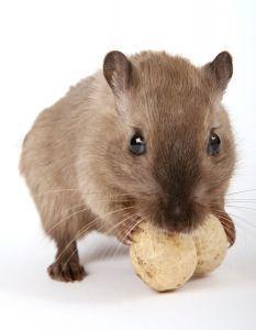 Mause Bekampfen Vertreiben Hausmittel Gegen Mause Im Haus