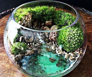 Ocean Scene Bowl Terrarium