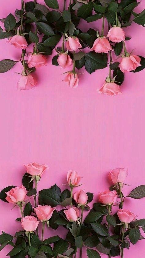 Nature Wallpaper Iphone Doodle Bunga Mawar Cantik Dan Kertas