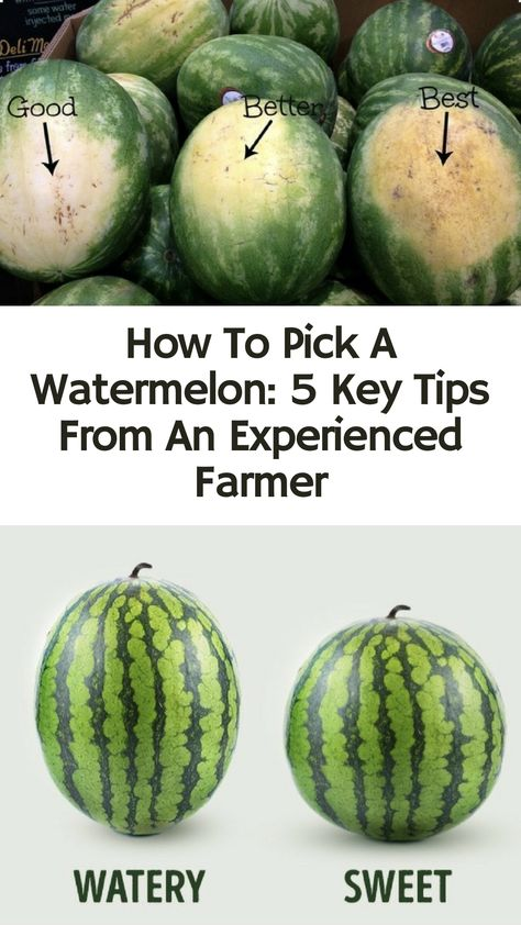 : Experienced farmer shares expert tips on how to pick the watermelons (and other fruits!) If you want the best hacks to pick and preserve the best fruits, look no further. Fruit Recipes, Cooking Recipes, Pan Cooking, Cooking Timer, Healthy Recipes, Cut Watermelon, Watermelon Ripeness, Picking Watermelon, When To Pick Watermelon