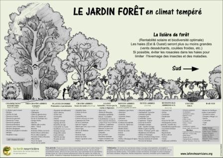 Definition De La Permaculture Jardin Foret