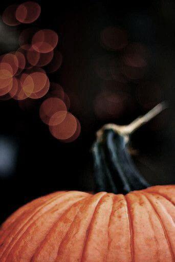 The Pumpkin Patch****