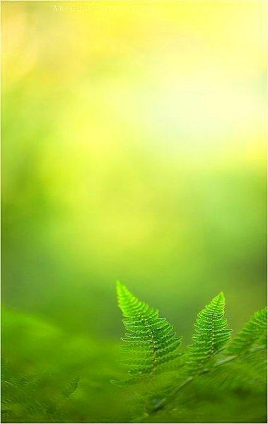 Trendy Flowers Yellow Green Nature Ideas Flowers Green Nature