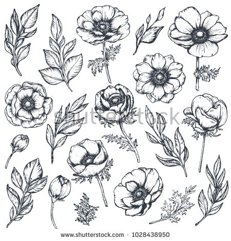 Vector Collection Of Hand Drawn Anemone Flowers Buds And Leaves In Sketch Style Isolated On White Backgrou How To Draw Hands Flower Drawing Hand Drawn Flowers