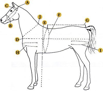 Biothane Driving Harness for Draft, Horse, Mule, Pony