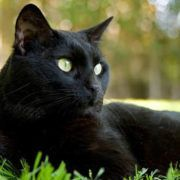 Home Remedies For Cat Diarrhea How To Cure Diarrhea Diarrhea Remedies Natural Remedies For Diarrhea