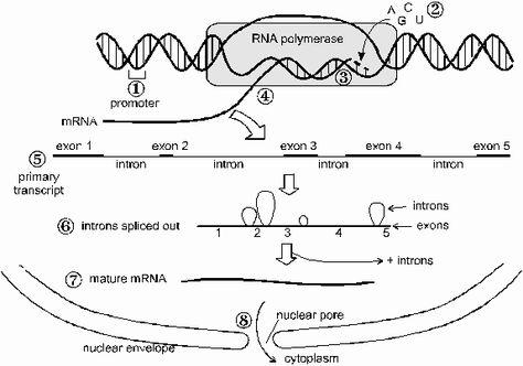 114 best genetika images on Pinterest School, Animation and Coding - amino acid chart