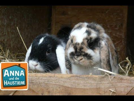 Kaninchen Reportage Fur Kinder Anna Und Die Haustiere Youtube Haustiere
