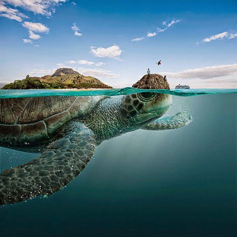 Whimsical Advertising Campaign Reimagines Galapagos Islands as ...