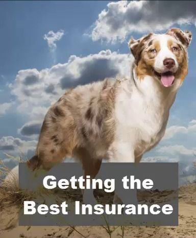What Is Pet Insurance And How Choose The Best Pet Insurance In 2020