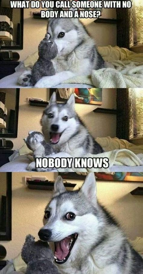 7 Pun Dog Puns That Will Instantly Brighten Your Day! - Funny Text - - 7 Pun Dog Puns That Will Instantly Brighten Your Day! The post 7 Pun Dog Puns That Will Instantly Brighten Your Day! appeared first on Gag Dad. Funny Husky Meme, Funny Dog Jokes, Dog Quotes Funny, Crazy Funny Memes, Really Funny Memes, Funny Relatable Memes, Pun Husky, Puns Jokes, Funny Humor