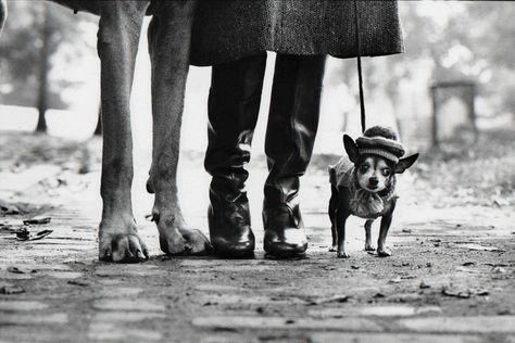 Elliott Erwitt Dog Legs New York City Elliott Erwitt Photography Elliott Erwitt Dog Leg