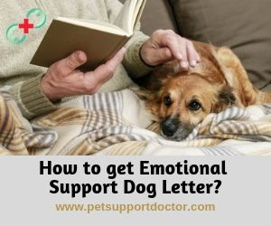 How To Get Emotional Support Dog Letter Emotional Support Dog Emotional Support Emotions