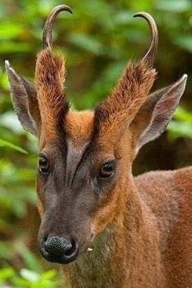 Pin By Wizzy On جديد Interesting Animals Weird Animals Unusual Animals
