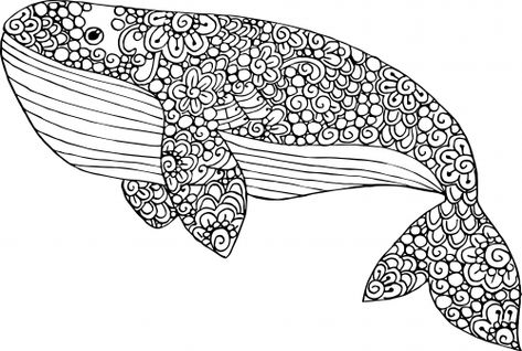 Image Result For Whale Vintage Whale Coloring Pages Blue Whale