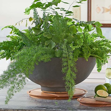 Prospect Heights Planter Bowl And Saucer In 2020 Easy Care Houseplants White Flower Farm Plants