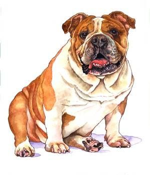 Bulldog Dogsofinstagram Dog Frenchie Dogs Bulldogsofinstagram Frenchbulldog Puppy Englishbulldog Bully Bulldog Drawing Bulldog Art Dog Paintings