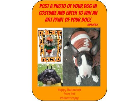 Post your pic of your pet in a Halloween costume and enter to win an art print of your pet!  post to Pet Philanthropy on Facebook