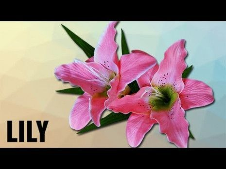 Wish Everyone Knew About Lily Flower