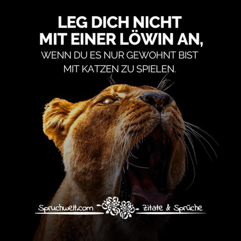 Leg dich nicht mit einer Löwin an, wenn du es nur gewohnt bist mit Katzen zu spielen - Reminder & Motivation #zitate #sprüche #spruchbilder #deutsch #motivation