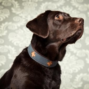 Halsband Cross Hundehalsband Leder Hunde Und Halsband